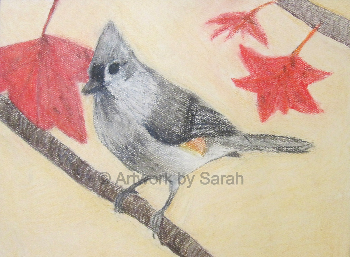 Songbird Collection #3: Tufted Titmouse