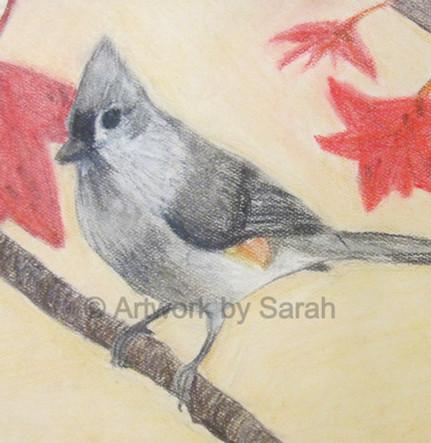 Songbird Collection #3: Tufted Titmouse