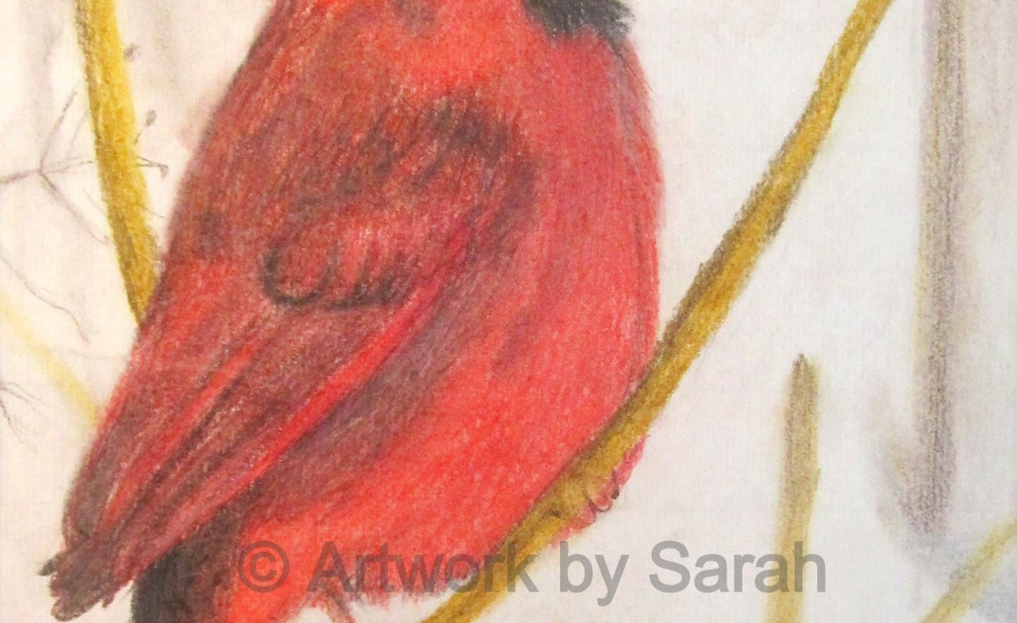 Songbird Collection #4: Northern Cardina