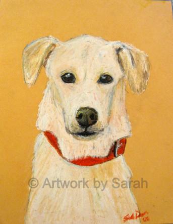 Puppy Portrait #5: Oliver