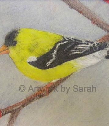 Songbird Collection #2: American Goldfin
