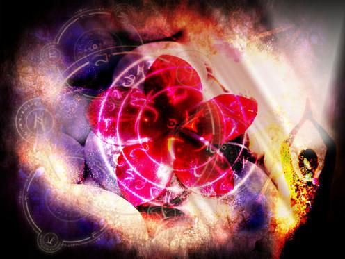 Magenta Lotus Heart of Love