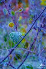 Givre d'automne