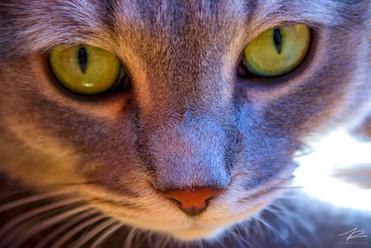 Curieux petit chat!