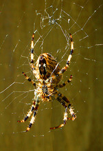 00_spider_R.jpg