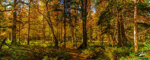 Automn trail