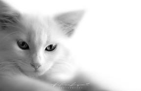 Blanc et blanc