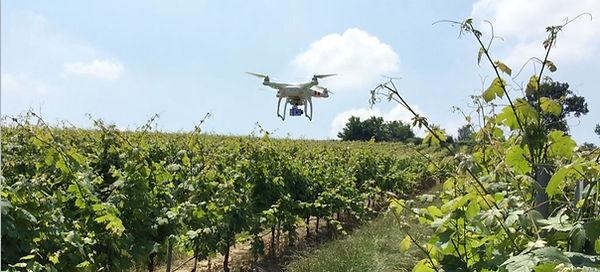Drone_in_vigna.jpg