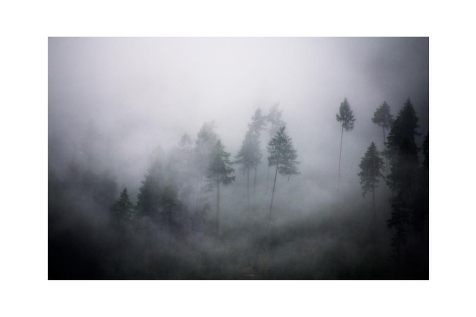 forest_Austria_17.jpg