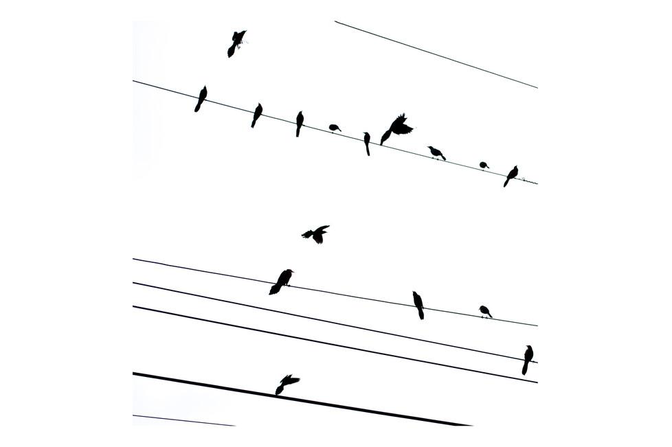 birds-panama-2012.jpg