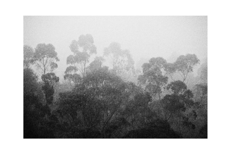 forest-ecuador-2013.jpg