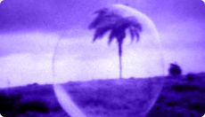 FOCO: CAO GUIMARÃES