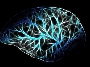 3 Holistic Health Tips For Better Brain Function