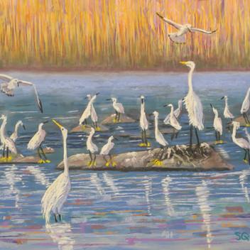 Congregation of Egrets - Sold