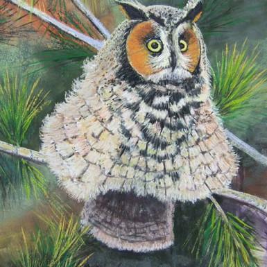 """Long-eared Owl - 16"""" x 12"""""""