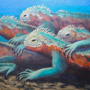 Marine Iguanas - Sold