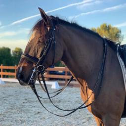 Duque C Horse Ranch .jpg