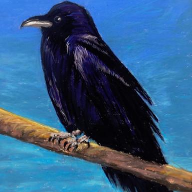 """Raven - 12"""" x 9"""""""