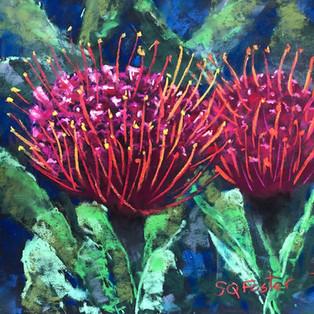 "Red Pincushion Protea - 9"" x 9"""