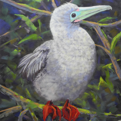 """Red-footed Booby - 16"""" x 12"""""""