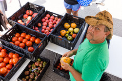LMF tomatos from above with vendor.jpg