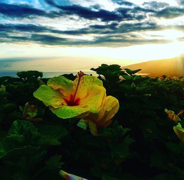 Solitude under the Hawaiian skies.jpg