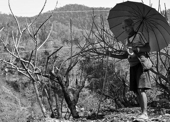 Umbrella stroll