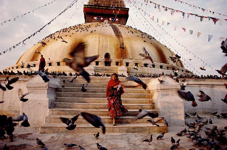 Nepal birds.jpg