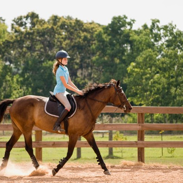 2K Stables | Full service equestrian facility on a 35+ acre farm!!