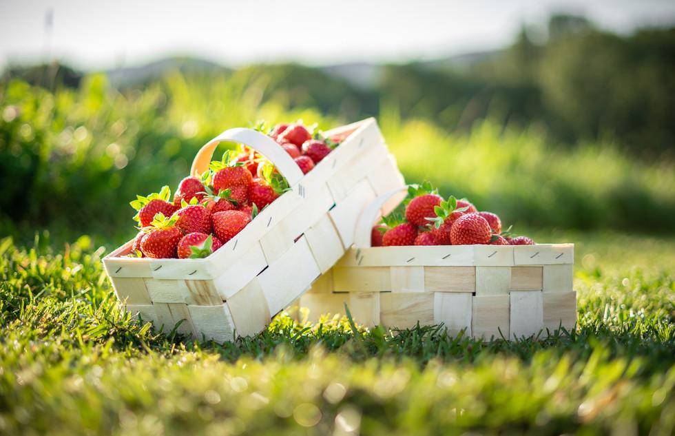 Erdbeeren Produktfoto