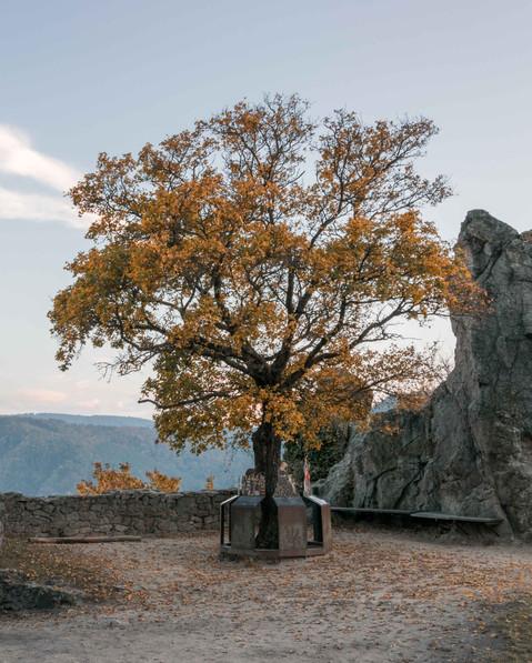 Wachau Ruine Dürnstein