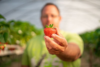 Erdbeere im Fokus