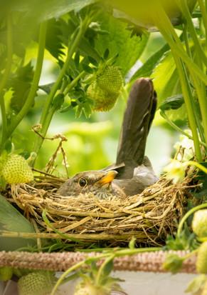 Vogel im Erdberfeld