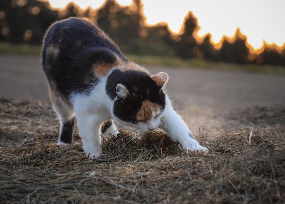 elegante Katze