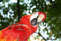 parrot-1070624__480.webp