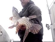 Pêche silure fire ball Rhône