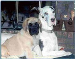 Familydogs.jpg