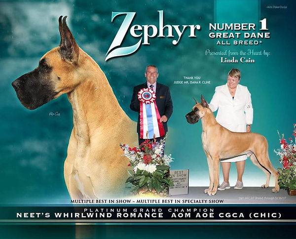 Zephyr.jpeg
