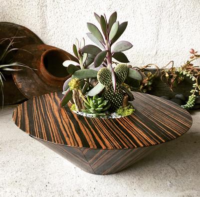 Cactus + Succulent