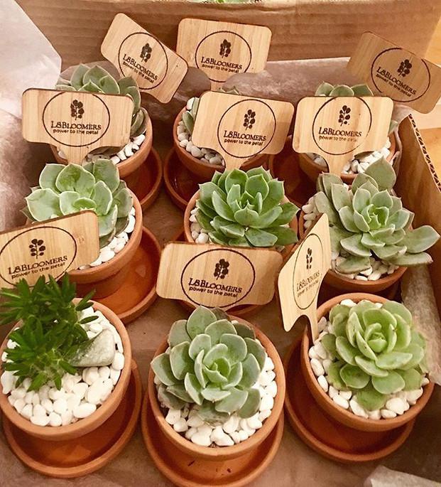 Succulent Minis!