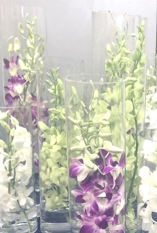 Elegant Submerged Orchids