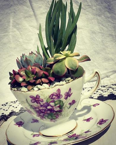 High Tea Collection