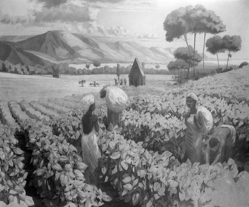 Tobacco Field (11x14in.)