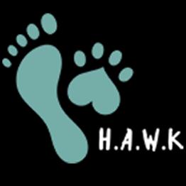 Hawk - Koinonia