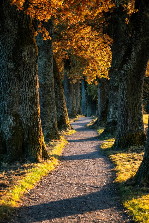 Herbst in einer Allee