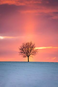 Ein einsamer Baum im Abendlicht