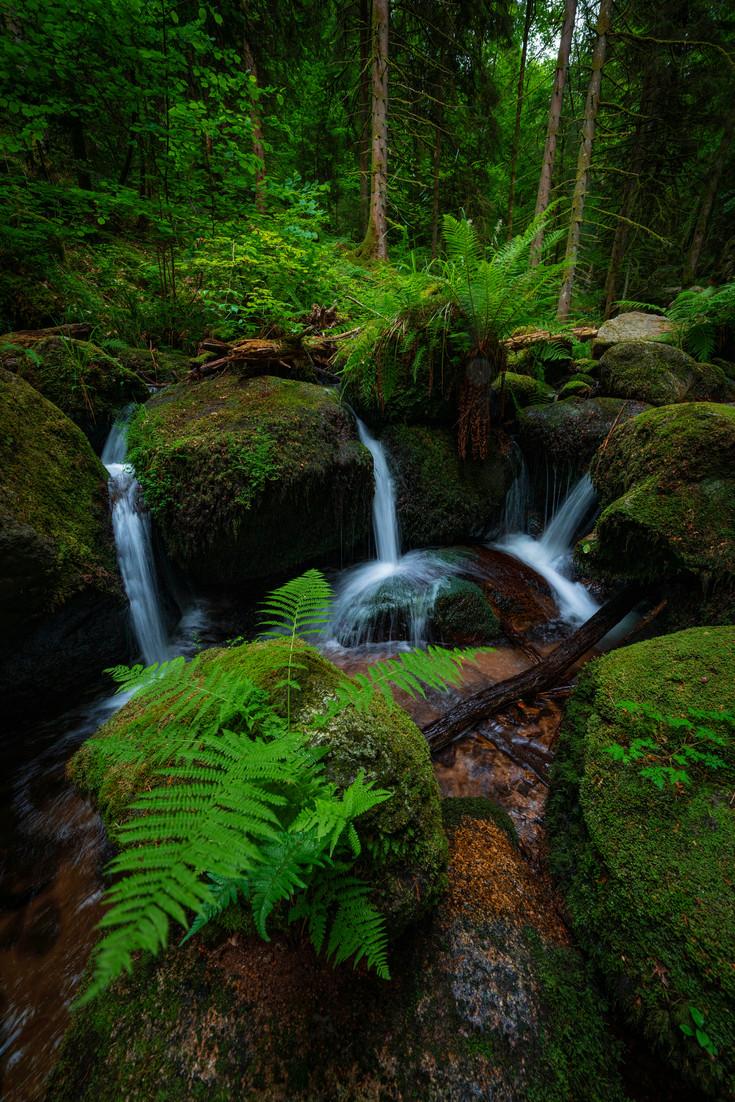 Gertelbach Jungle