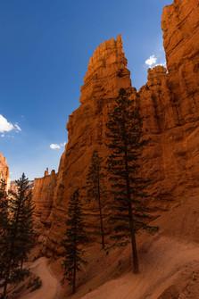 Der Weg in den Bryce Canyon