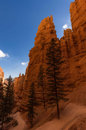 Der Weg in den Bryce Canyon