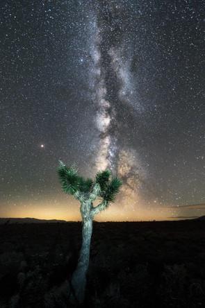 Die Milchstraße über einem Yoshua Tree